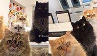 Instagram'ı 12 Minnoş Kedisinin Fotoğrafları ile Doldurup Taşıran Güzel Yürekli Kadın