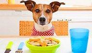 Canımızdan Çok Sevdiğimiz Köpek Dostlarımıza Evde Hazırlayabileceğimiz 11 Mama Tarifi