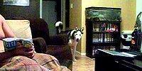 Julia Roberts'dan Aşırı Korkan Köpek