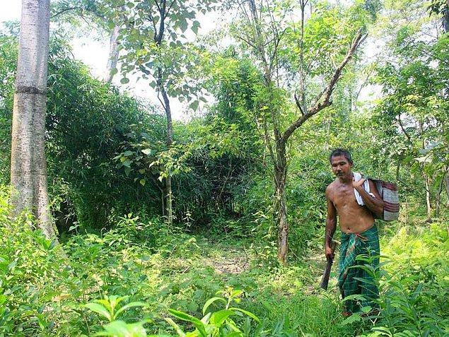 Molai Ormanı ayrıca her yıl binlerce kişi tarafından da ziyaret ediliyor.