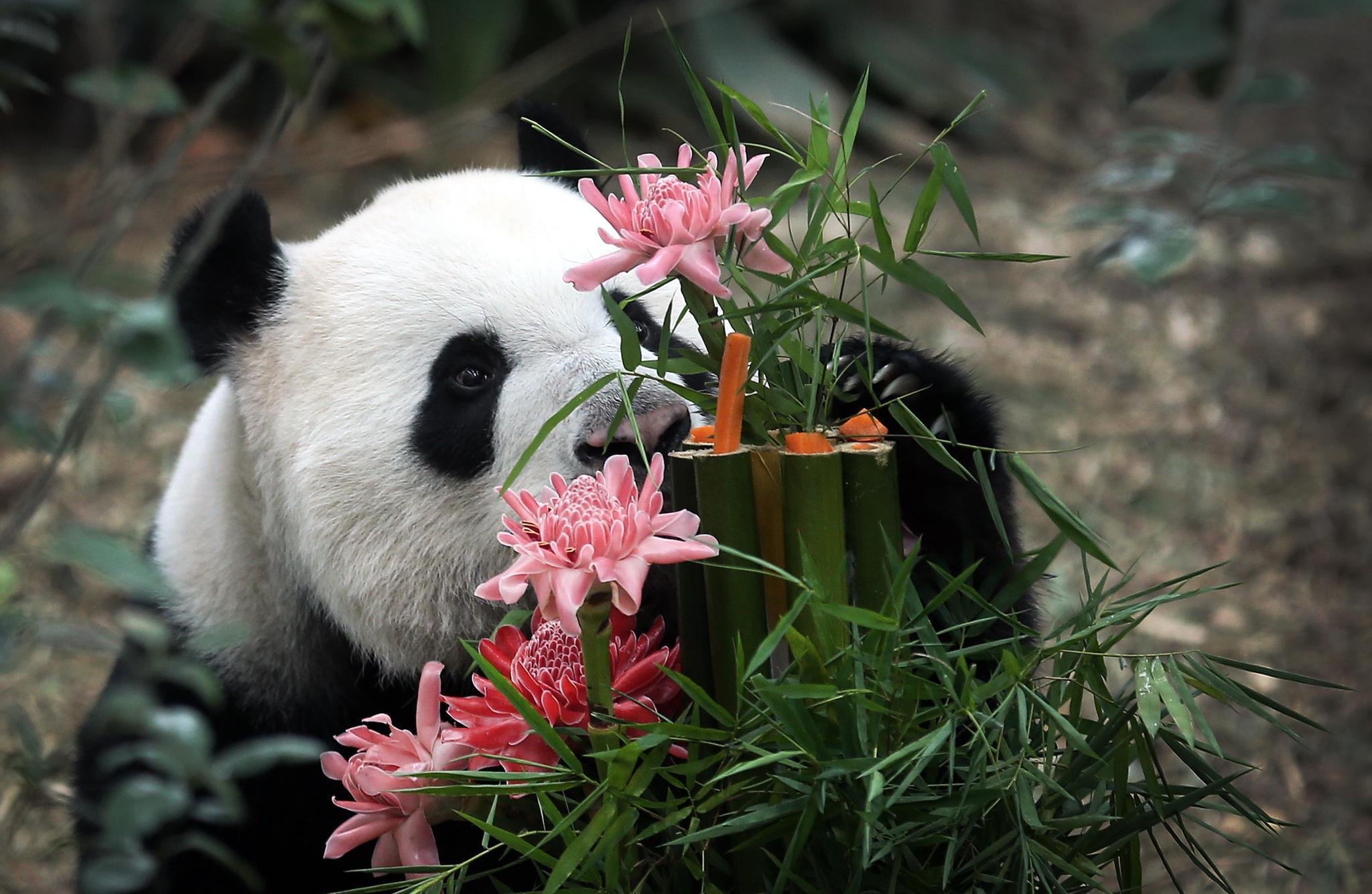 шкаф картинка животное с цветком заметную роль, принёсшую