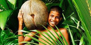 Annemizin Bıçak Ucuna Takıp Bizi Kuş Gibi Beslediği Meyveler Hakkında Bilinmeyen 20 Gerçek