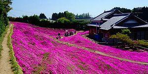Aşkın Duyusu Sınırsızdır! Görme Engelli Eşi Her Gün Gülümsesin Diye Bahçeyi Çiçeklerle Donatan Adam