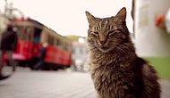 İstanbul'un 'Kedi'leri Amerika Gündeminde