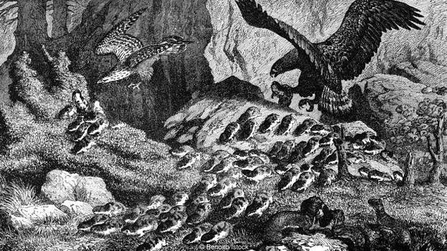"""11. Bilimin Cevap Aradığı, Kafa Kurcalayan Çok Garip Bir Soru: """"Hayvanlar İntihar Eder mi?"""""""