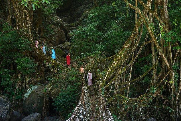 1. Khasi Köprüleri - Hindistan