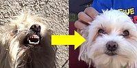 Terk Edilmiş Köpeği Sokaktan Kurtaran Güzel İnsanlar