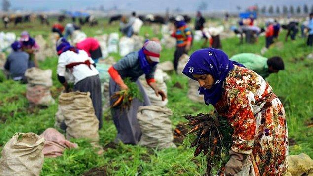 Mevsim etkilerinden arındırılmış istihdam ve işsizlik arttı.
