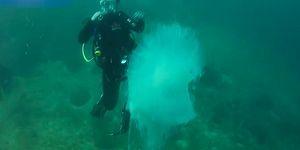 Nadir Görülen Bir Denizanasını Görüntülemeyi Başaran Şanslı Adam