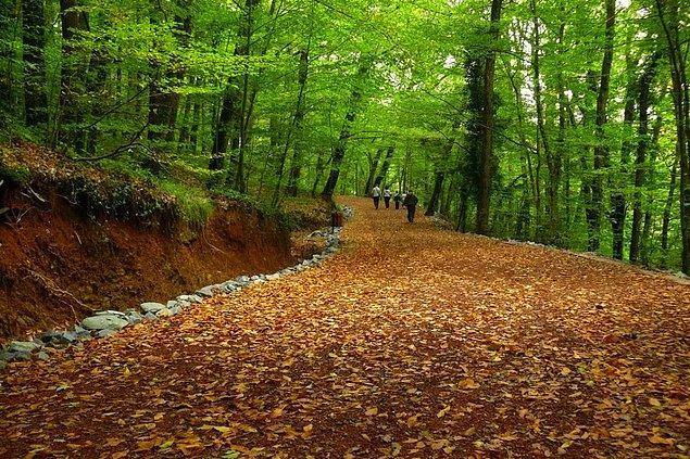 17. Belgrad Ormanı