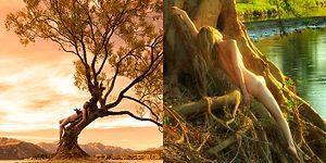 Kendisini Ağaçlar ile Bütünleşerek Fotoğraflayan Fotoğrafçıdan 9 Göz Alıcı Fotoğraf