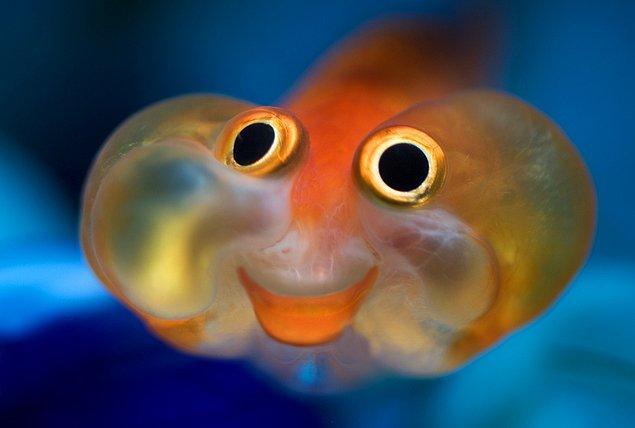 3. Kabul edelim, balık her derde deva oluyor!