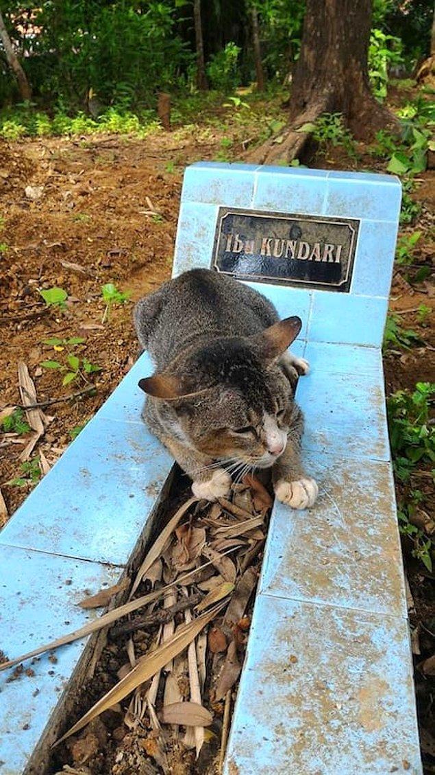 Sahibinin ölümüyle adeta yıkılan bu kedicik 1 yıldır sahibi olan kadının mezarından ayrılmıyor.