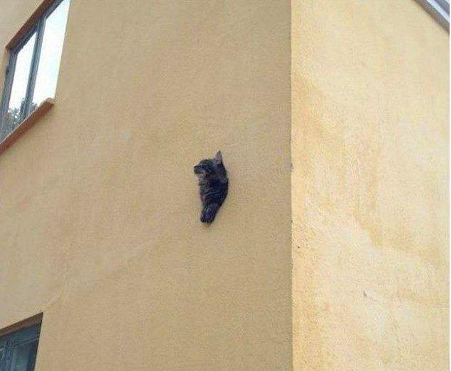 4. Duvarda duran yarım bir kedi mi yoksa delikten çıkan bir kedi mi? Tabii ki de yarım bir kedi 😁
