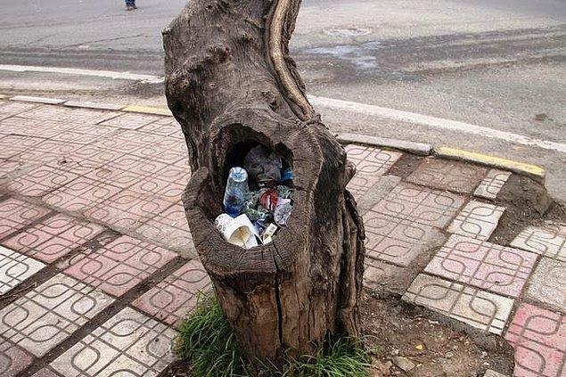 1. Yoldan geçenlerin attığı çöplerle dolmuş ağaç kovukları.