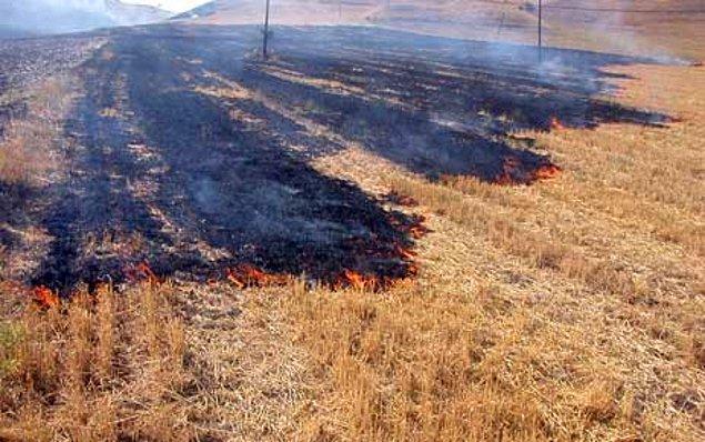 7. Yaz aylarında yakılarak mahallenin dumanla kaplanmasına neden olunan kuru otlar.