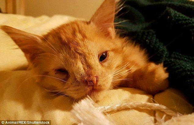 Romeo'nun yüzündeki sıradışılık haricinde hiç bir sağlık problemi yok. Diğer bütün yaramaz yavru kediler gibi o da koşup, oynayıp, mırlayarak uyuyor.
