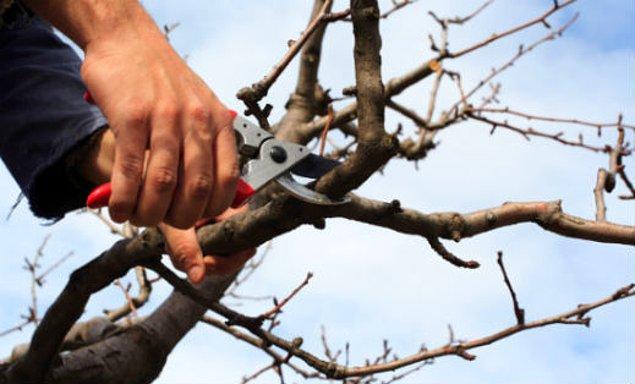 5. Havalar soğumadan ağaçları budayalım.