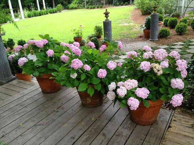 10. Minik bahçe saksıları içeriye!