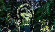 Çarpıcı Bir Konuya Parmak Basmak İçin İlk Kez Amazon Yağmur Ormanında Yapılan Sokak Sanatı
