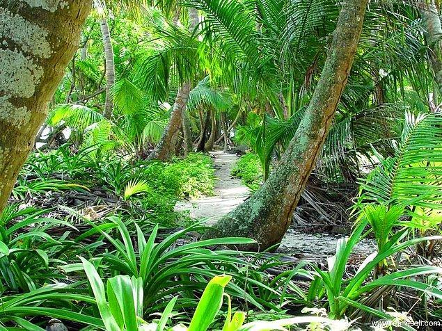 Son günlerde ise en uzun tropik ağaç ile karşılaştık.