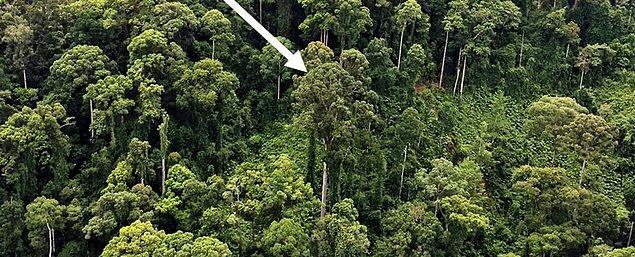 """""""Peki, bulunan ağaç kaç metreymiş?"""" diye merak ediyorsanız..."""