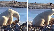 Kutup Ayısı ile Köpeğin Muhteşem Dostluğu