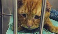 Dünyanın En Üzgün Kedisi: BenBen