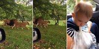Babasının Safari Heyecanına Ağız Dolu Kusmuğu ile Ortak Olan Ufaklık