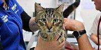 Avustralya'da Bir Evde Terk Edilen 14 Kedi Birbirini Yedi...