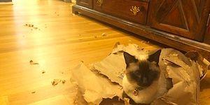Evcil Hayvanların En Olmadık Yere Veterinere Götürüldüğü Birbirinden Trajikomik 20 Hikaye