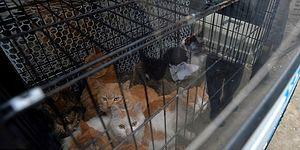 Çin'de Hayvansever Kılığında 'Kurtarıyorum' Dediği Sokak Kedilerini Restoranlara Satan Cani