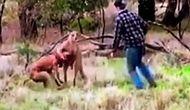 Köpeğinin Boğazını Sıkan Kanguruyu Yumruklayan Adam