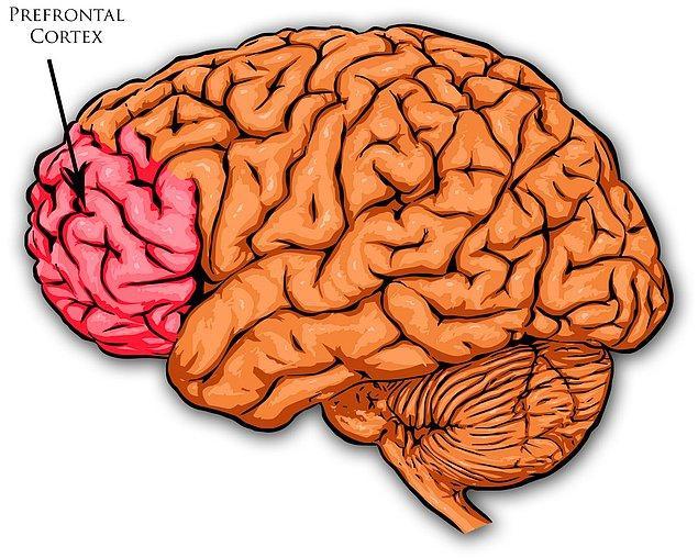 Bu sendrom bizi ölüme kadar da götürebiliyor. Ancak beynimiz mutlu olmaya devam edebilmemiz için çalışmaya devam ediyor...