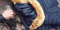 İnsanlığın Ölmediğinin Bir İspatı Daha: Montunu Çıkarıp Yaralı Köpeğin Üzerine Örttü