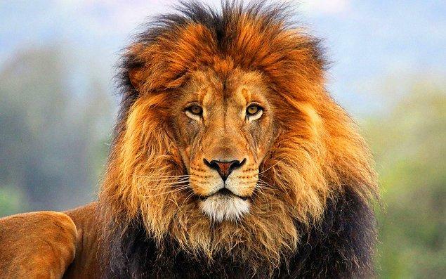 Kralsın be!
