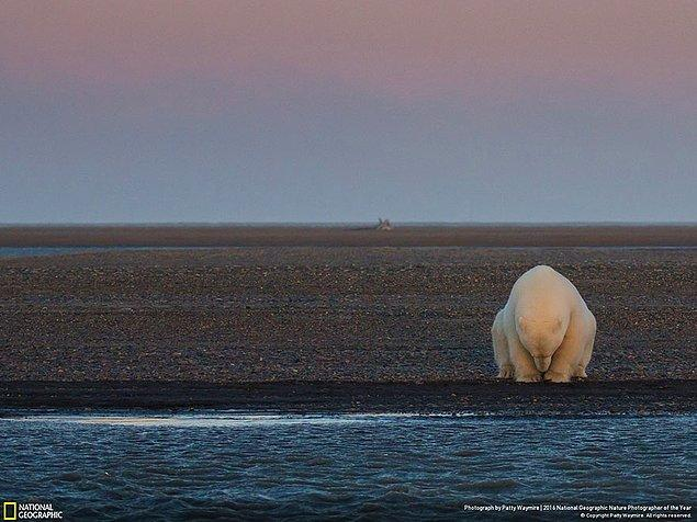 1. Çevresel sorunlar dalında şeref ödülü: Kar yok, buz yok? Barter Adaları