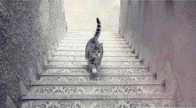 6. Sıra inmek-çıkmakla ilgili görsel algılarında. Sence bu kedi aşağı mı iniyor, yukarı mı çıkıyor?
