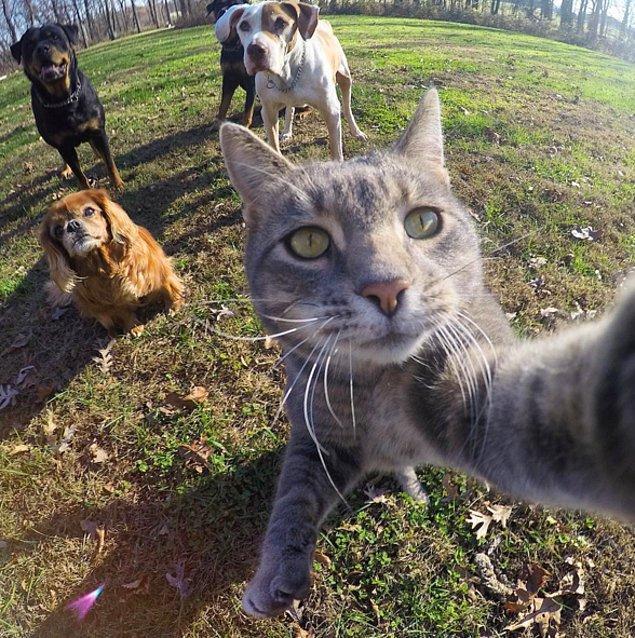 14. Özçekim kedisi Manny'yi bütün internet takibe aldı!