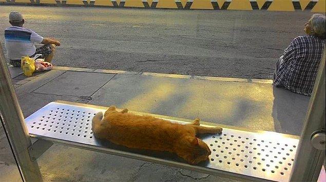 3. İzmir'den sıcacık bir kare. Otobüs beklerken kediyi rahatsız etmek istemeyen iki güzel insan.