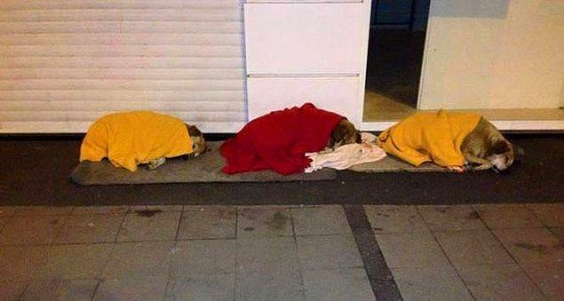 7. İzmir'den bir kare: Aramızdaki güzel insanların, üşümesinler diye battaniye ile üstlerini örttükleri köpekler. ☺️