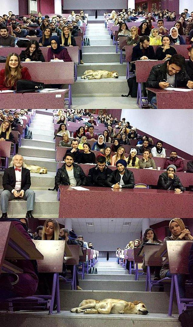 6. Antalya Akdeniz Üniversitesi öğrencileri de, soğuk havadan kaçıp sınıfa giren bir köpeği rahatsız etmeden derse devam ediyorlar.