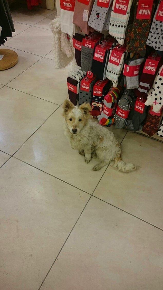 11. Sakarya'daki bir mağaza çalışanlarının, soğukta üşümesin diye içeri aldıkları bir köpek.