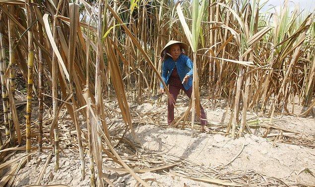 26. Mekong Deltasıdaki tarım sektörü Vietnam'ın pirinç ve diğer tahıl ürünlerinin yarısını karşılıyor. Fakat koşullar son 100 yılın en kötüsünü gördü ve tarım alanları hemen hemen kullanılmayacak halde.