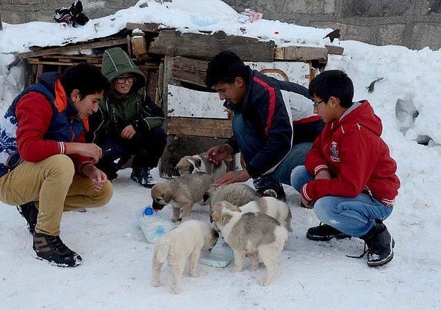 14. Kars'taki bu gençler, yeni doğum yapan bir köpeğin yavrularına bakabilmek için harçlıklarını biriktirmişler ve bu miniklere kulübe yapmışlar.