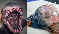Okyanusun Derinliklerinde Yaşayan İlginç Hayvanların Fotoğraflarını Paylaşan Rus Balıkçı