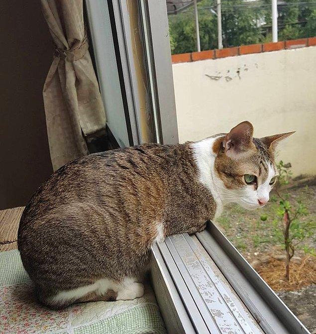 Able artık kuş yakalayamıyor ancak onları pencereden izlemekten bolca keyif alıyor.