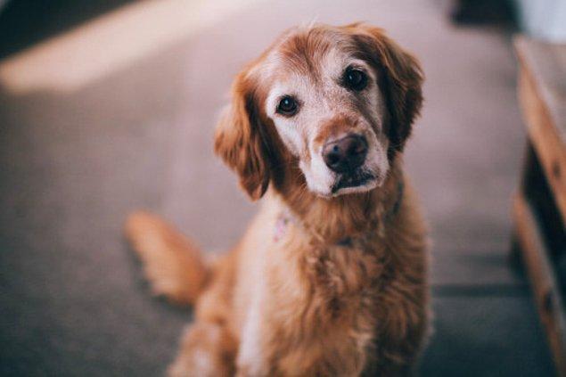 En basit açıklama olarak çoğu insan, köpeklerin çok akıllı hayvanlar oldukları için ezanın ardındaki çağrının farkına vararak buna cevap verdiklerini söylüyorlar.