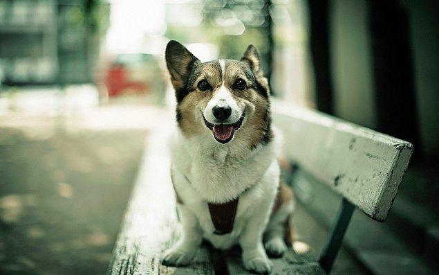 Sokak köpekleri de aynı bu deneydeki gibi gürültülü sesleri duyar duymaz kulaklarının rahatsız olacağını zannediyor olabilirler.