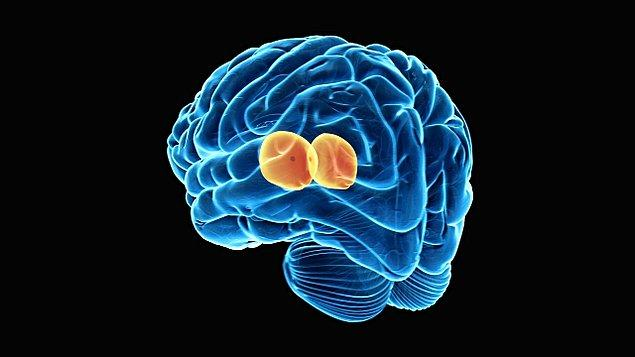 Bu rahatsızlık, beynin talamus adı verilen kısmında bulunan nöronlara hasar veriyor.